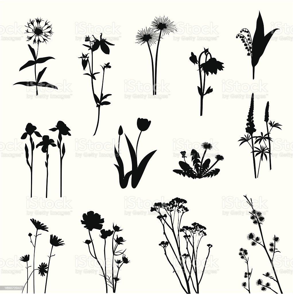 Wildblumen – Vektorgrafik