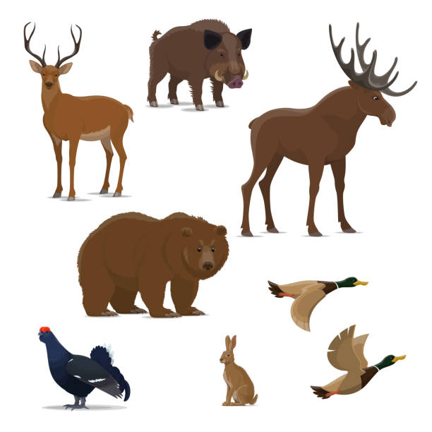 Wild forest animal and bird icon of hunting sport Wild forest animal and bird isolated icon set for hunting sport design. Bear, duck and deer, reindeer, hare and elk, boar and black grouse symbol of carnivore, herbivore mammal and game bird elk stock illustrations