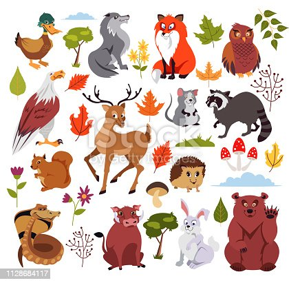 Wild forest animals characters set with plans, mushroom and tree. Graphic design for children book. Vector flat isolated cartoon