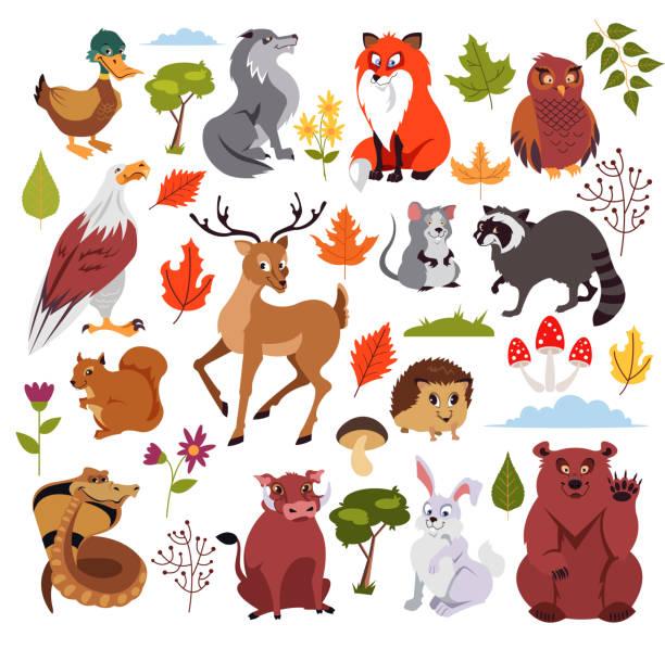 wilden wald tiere zeichen setzen mit plänen, pilz und baum. grafik-design für kinderbuch. vektor-flache isoliert cartoon-illustration - kaninchenbau stock-grafiken, -clipart, -cartoons und -symbole