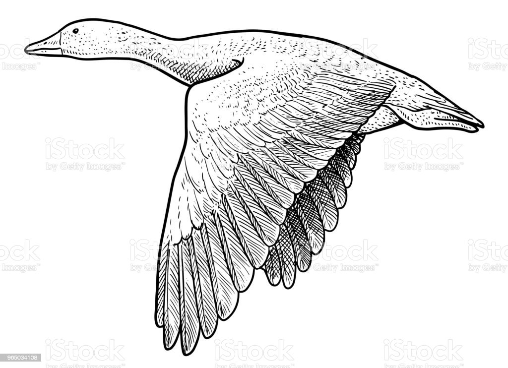 Wild geese illustration, drawing, engraving, ink, line art, vector royalty-free wild geese illustration drawing engraving ink line art vector stock vector art & more images of animal