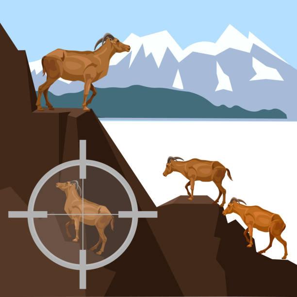 wild ziegen in den bergen - bergziegen stock-grafiken, -clipart, -cartoons und -symbole