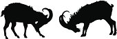Two fighting wild goat as black silhouette.