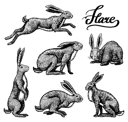 Wild hares set. Rabbits are sitting and jumping. Forest bunny or coney Collection. Hand drawn engraved old sketch for T-shirt, tattoo or label or poster. Vector illustration