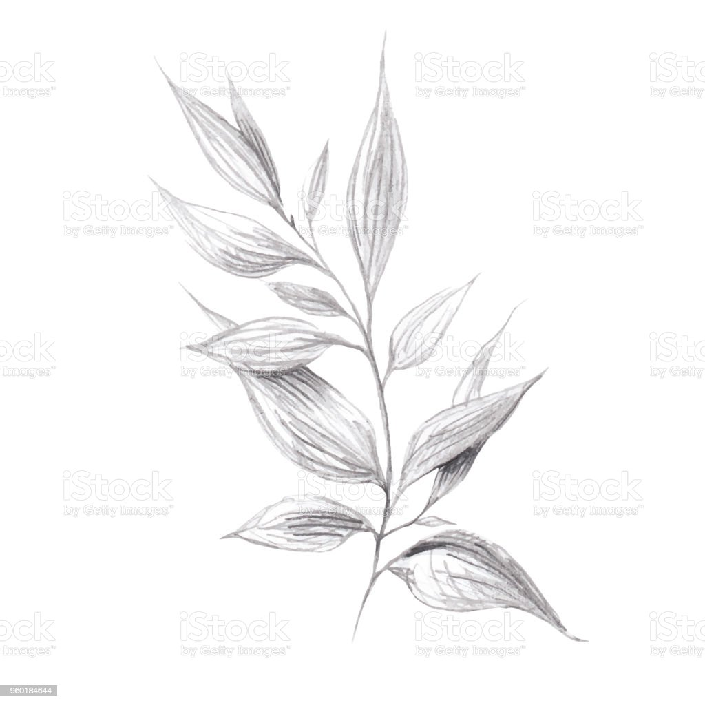 Wild herb branch pencil drawing stock illustration download image now