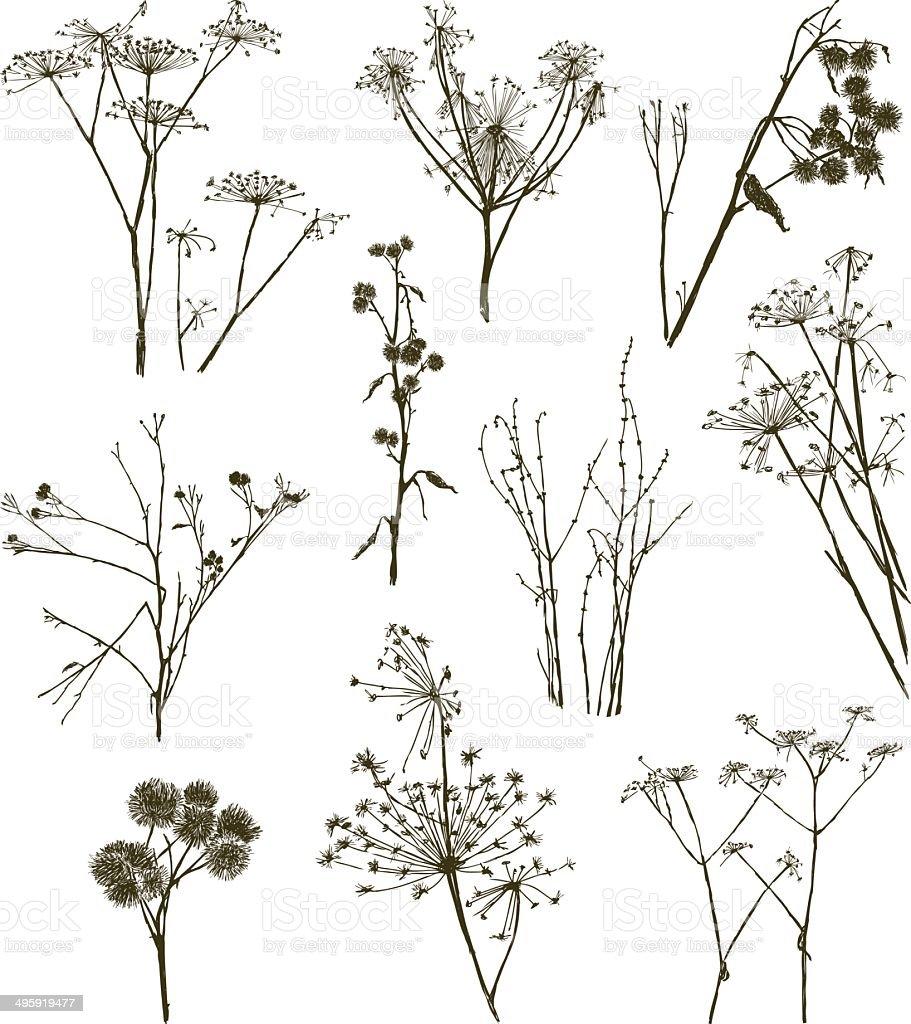 wild herbal plants vector art illustration