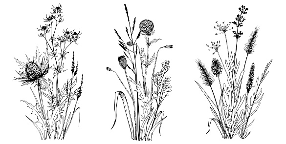Wild herbs and flowers.
