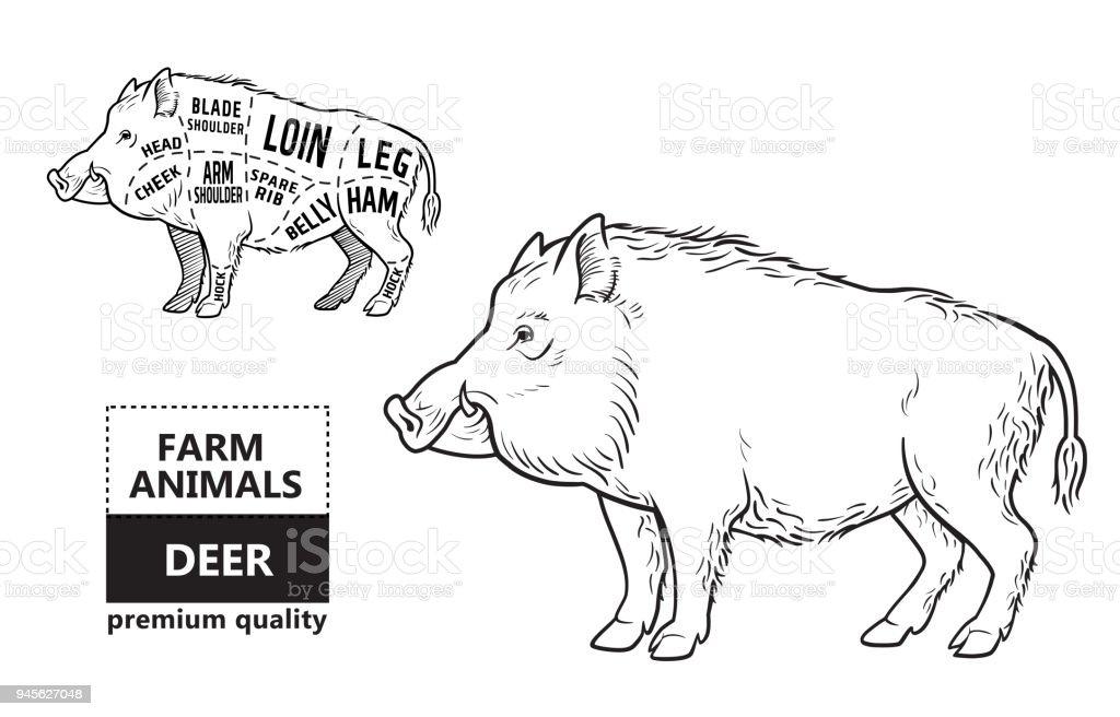Wild hog, boar game meat cut diagram scheme - elements set on chalkboard vector art illustration