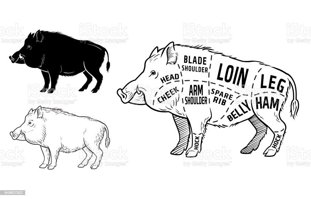 Wild Pig Anatomy Diagrams - Wiring Diagram Services •