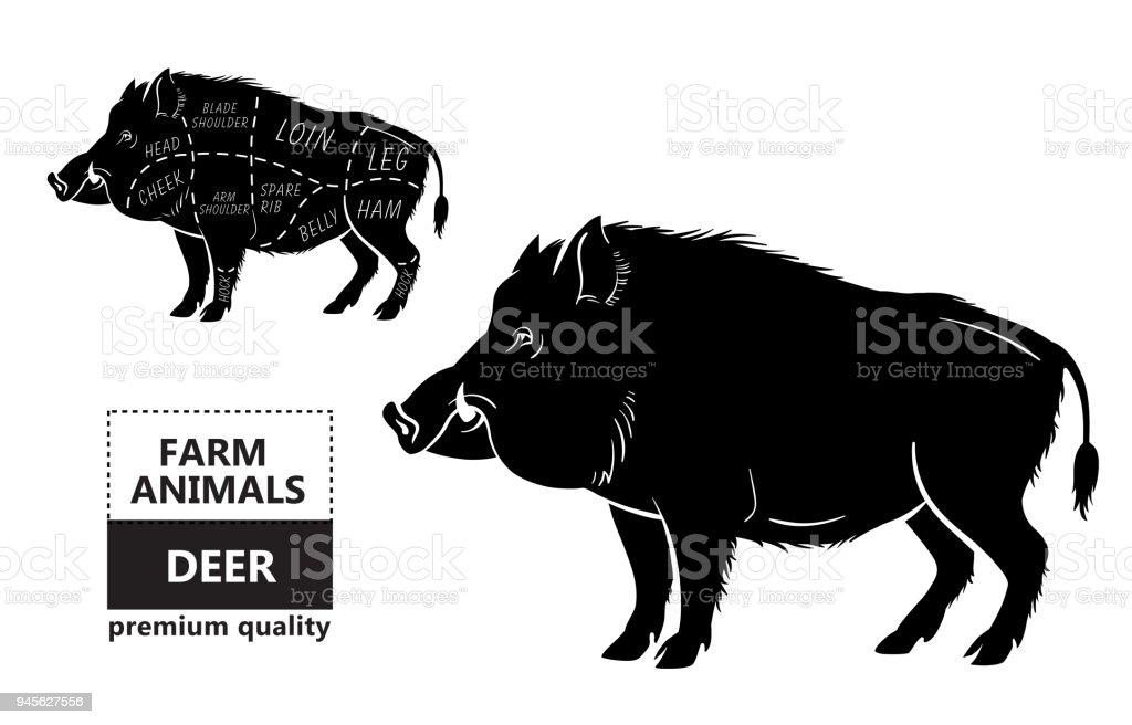 Wild Boar Anatomy Diagram - DIY Enthusiasts Wiring Diagrams •