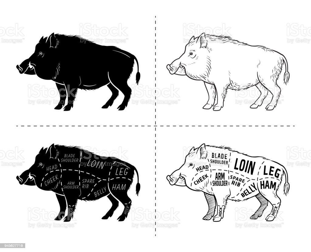 Wild Hog Boar Game Meat Cut Diagram Scheme Elements Set On ...