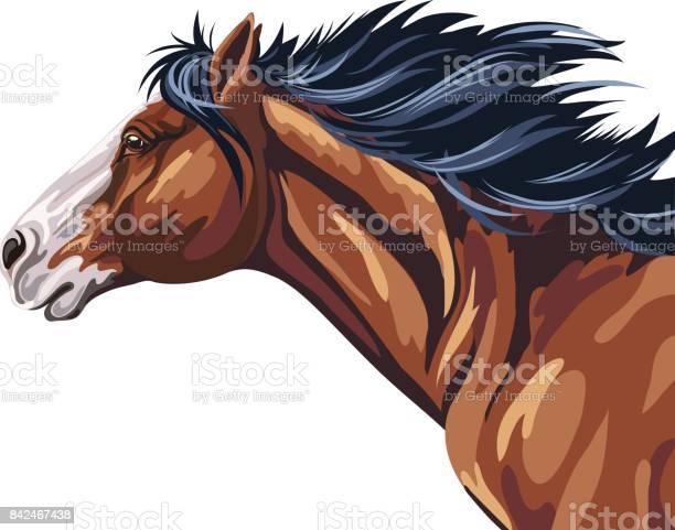 Wild horse running vector id842467438?b=1&k=6&m=842467438&s=612x612&h=ynpr3ll33brz ztynihygwueutwyfmkjqyj qhsidrq=