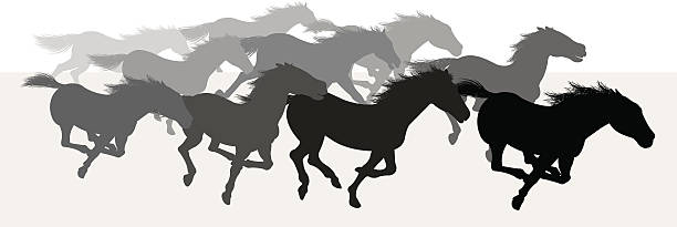wilde pferde stampede-silhouette - mustangs stock-grafiken, -clipart, -cartoons und -symbole