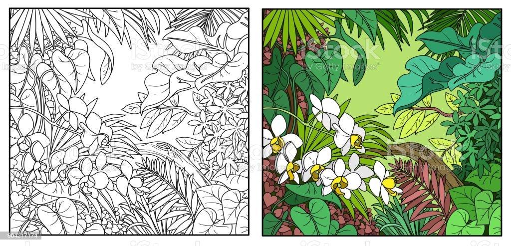 Ilustración de Color De Selva Salvaje Y Línea De Contorno Negra ...