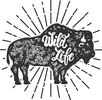 Wild Life Grunge Style Bison Silhouette Isolated On White Background Design Elements For Label Emblem Sign Vector Illustration Stock Illustration - Download Image Now