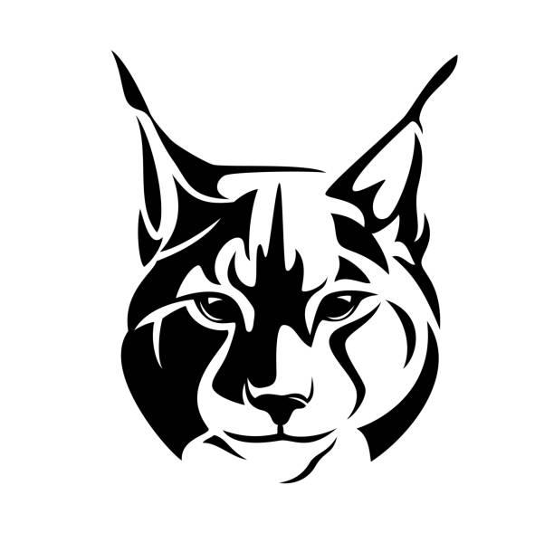 wild lynx cat black vector en face head outline wild lynx looking straight forward - bobcat en face head black and white vector design bobcat stock illustrations
