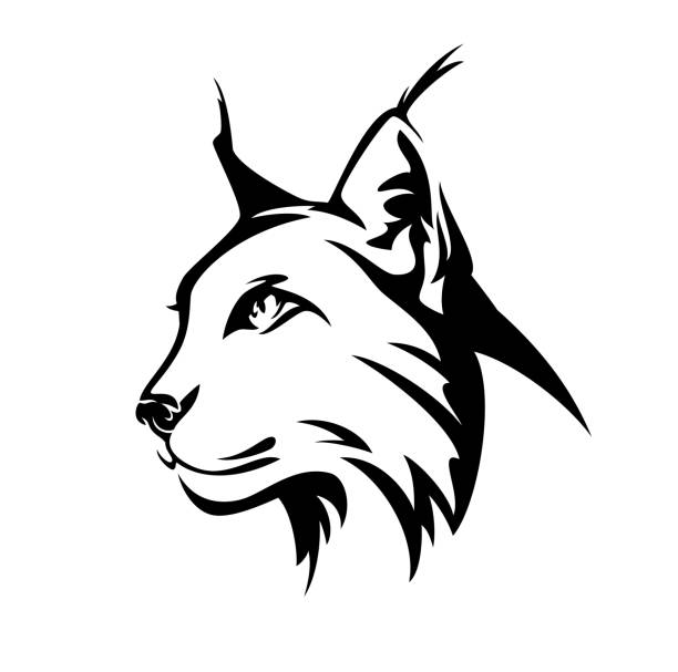 Best Bobcat Illustrations Royalty Free Vector Graphics