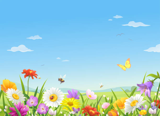 Wild Meadow Flowers Under A Blue Sky A meadow full of beautiful flowers, bees and butterflies in spring or summer. In the background is a landscape with hills and a bright blue, cloudy sky. Vector illustration with space for text. meadow stock illustrations