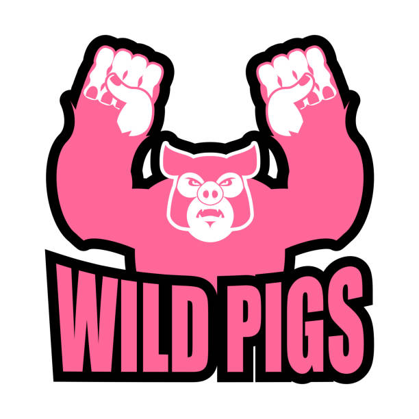 wild pigs logo for sports team. angry pig. aggressive boar. - pig ugly stock-grafiken, -clipart, -cartoons und -symbole