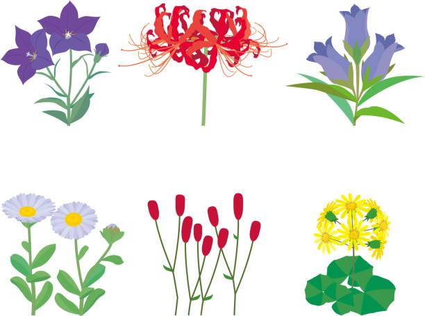 Wild plant flowers vector art illustration