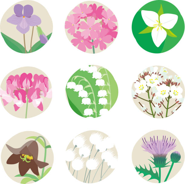 Wild plant flowers vegetation trillium stock illustrations