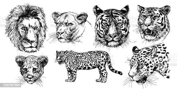 Wild predators vector id1032597800?b=1&k=6&m=1032597800&s=612x612&h=xzvia3b1ylsqnwtbypfsb8kpjrextg5wpqpxw5vtjdm=