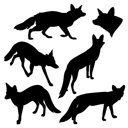 wild red fox black vector silhouette set isolated on white
