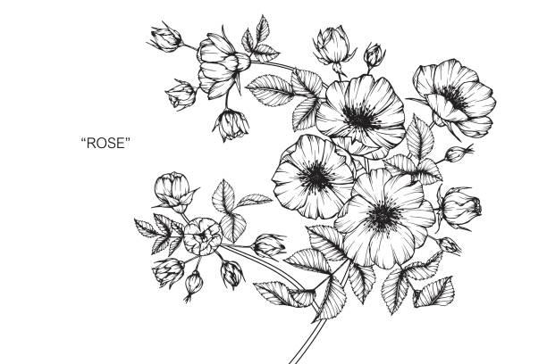 illustrations, cliparts, dessins animés et icônes de fleur rose sauvage de dessin. - tatouages de fleurs