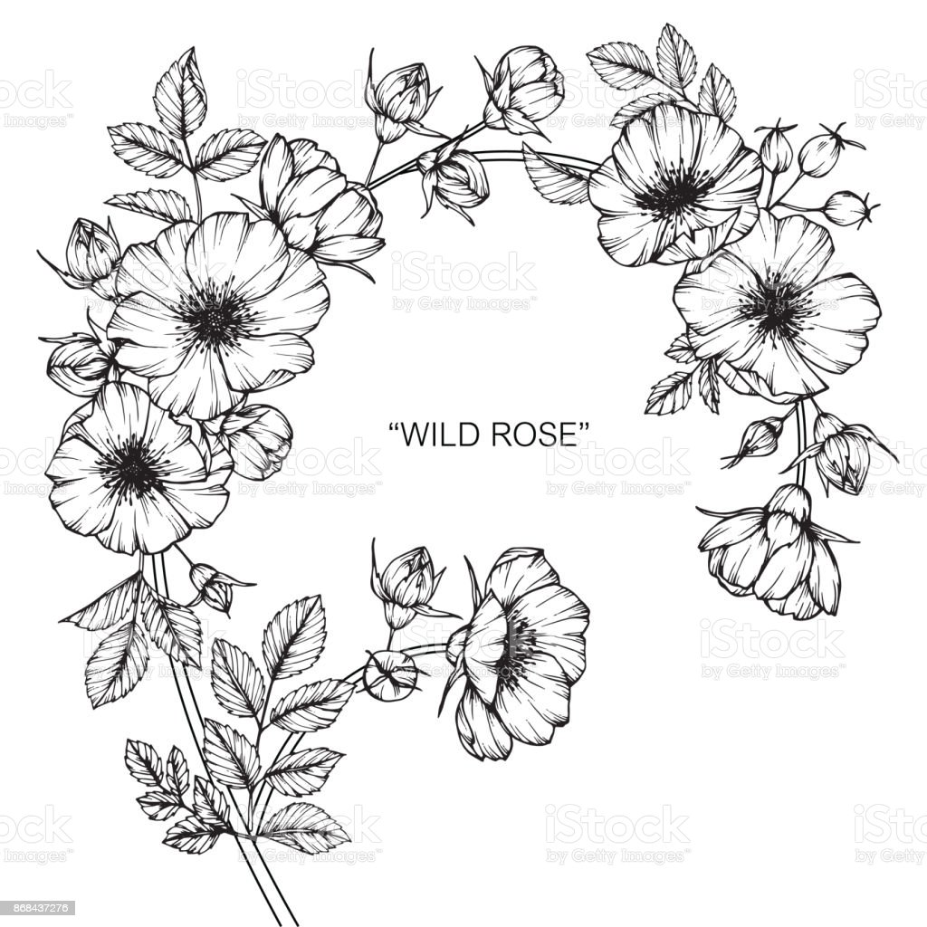 Wild rose flower drawing stock vector art more images of art wild rose flower drawing royalty free wild rose flower drawing stock vector art amp thecheapjerseys Image collections