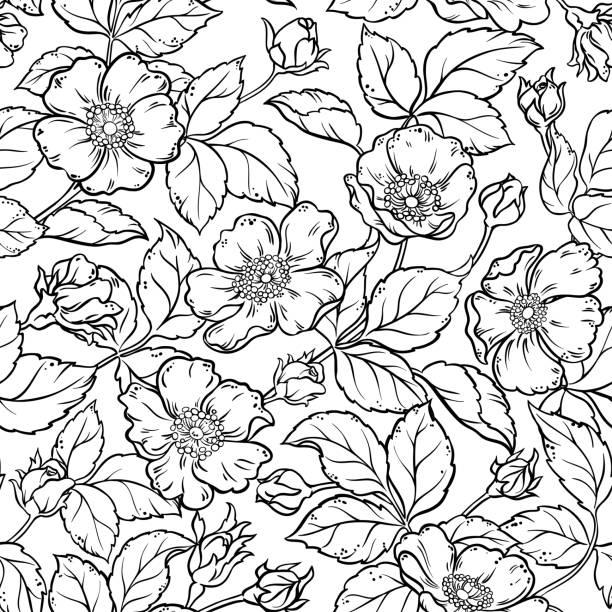 wild rose flowers seamless pattern wild rose flowers seamless pattern on white background wild rose stock illustrations