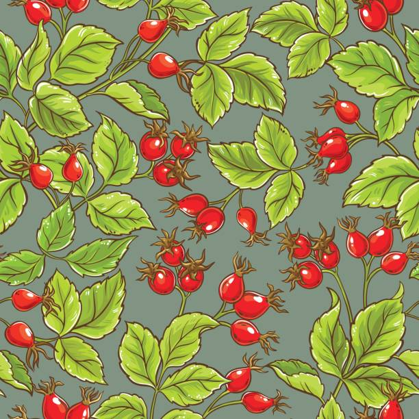 wild rose vector pattern wild rose vector pattern on color background wild rose stock illustrations