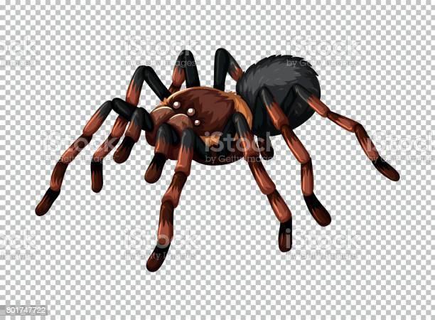 Wild Spider On Transparent Background Stock Illustration - Download Image Now