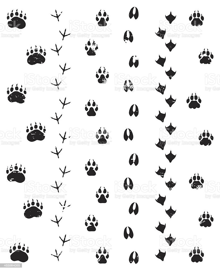 Wild Steps vector art illustration