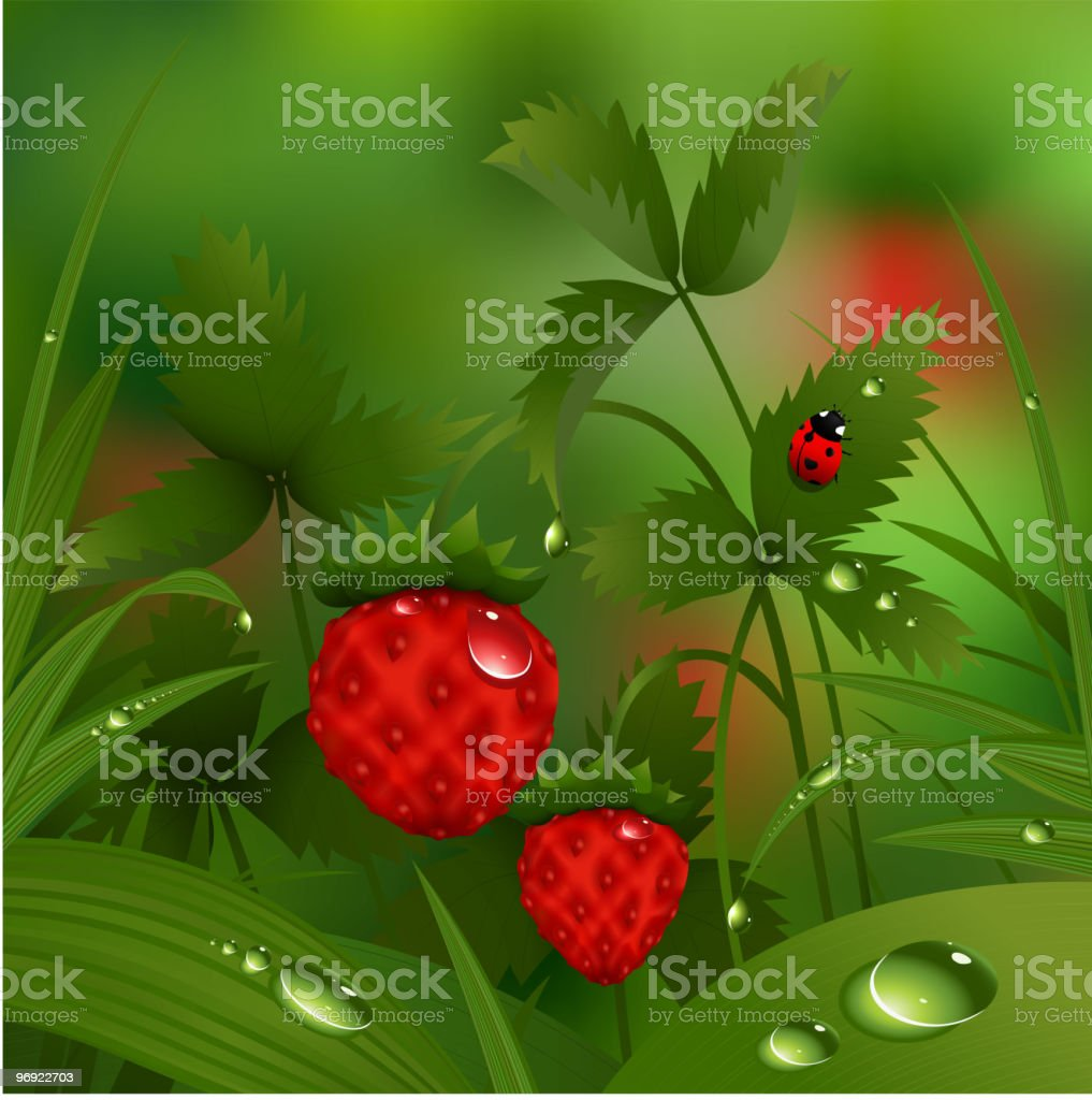Wild strawberry in the morning forest royalty-free wild strawberry in the morning forest stock vector art & more images of berry fruit