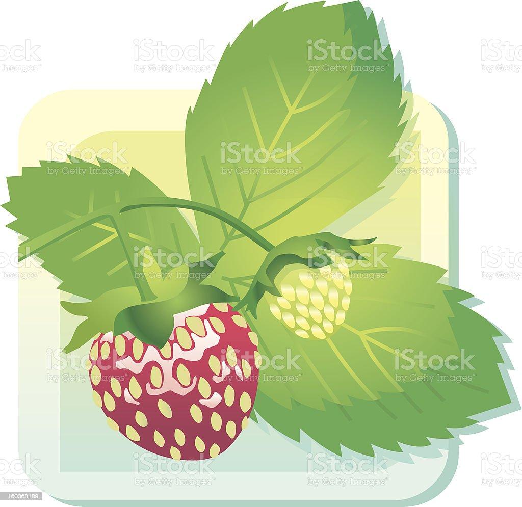 wild Strawberry royalty-free stock vector art