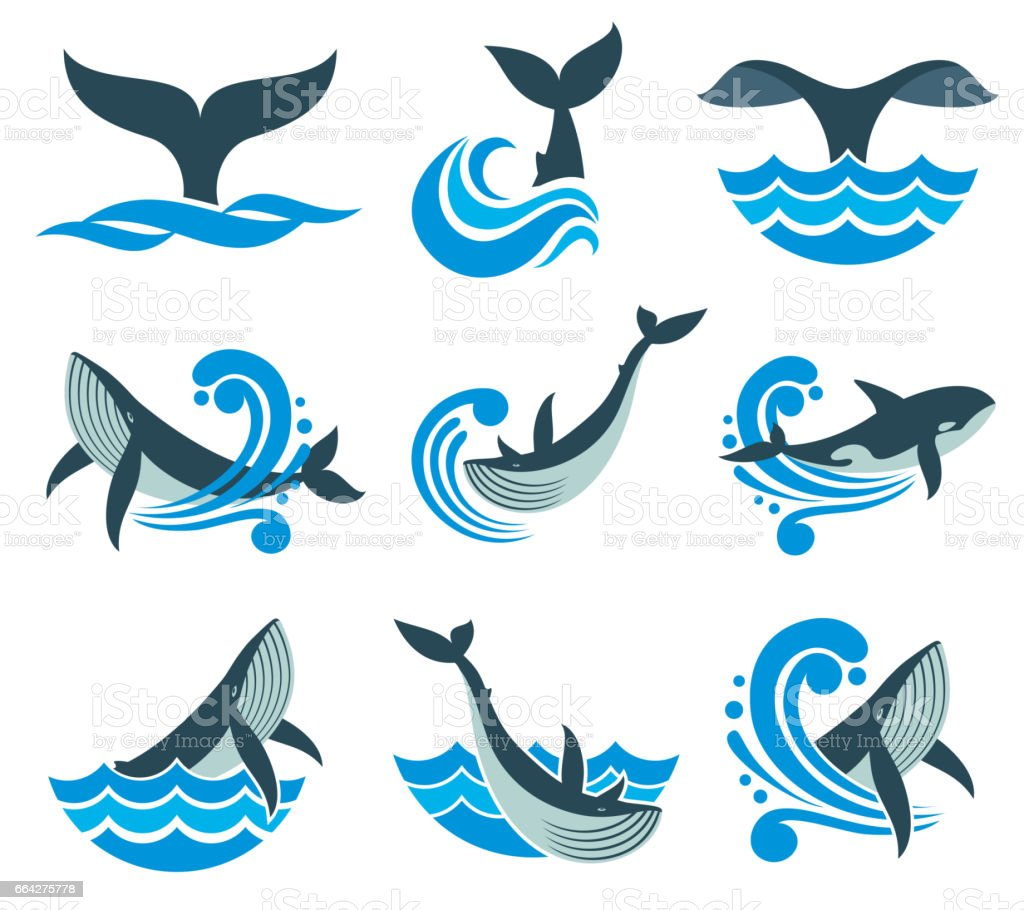 Wild whale in sea waves and water splashes vector icons vector art illustration