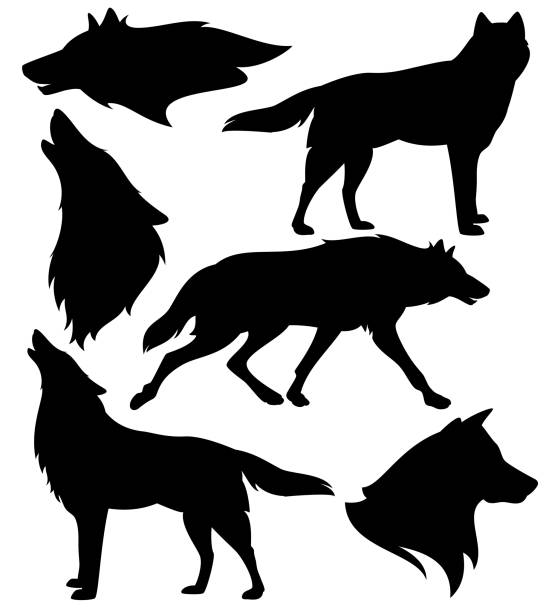 illustrazioni stock, clip art, cartoni animati e icone di tendenza di wild wolves black and white vector silhouette set - lupo