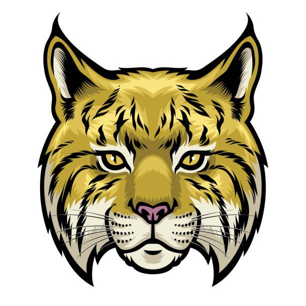 wildcat head vector of wildcat head bobcat stock illustrations