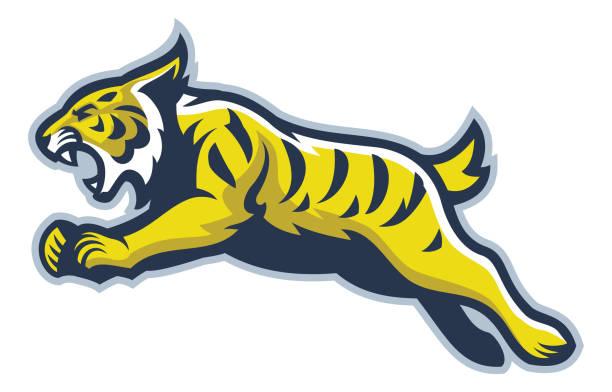 Wildcat mascot vector of Wildcat mascot bobcat stock illustrations