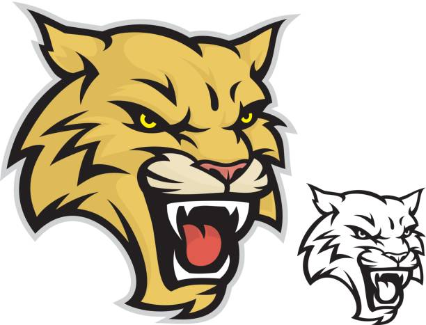 Wildcat Mascot Clean and simple Wildcat head mascot. Great for sports teams and screen printing projects. Also includes a black & white version. bobcat stock illustrations