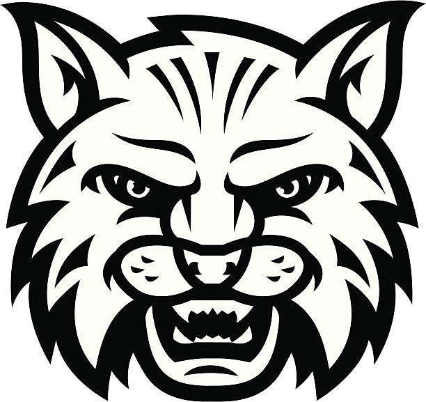 Wildcat Scream B&W This is a simple one color wildcat or bobcat head. A FULL COLOR version is also available for download. The file is provided in Illustrator CS2, version 8 EPS and a 12x12 inch 300dpi high-rez jpg. bobcat stock illustrations