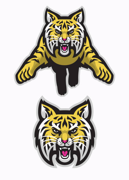 wildcats mascot attacking in american sport mascot style vector of wildcats mascot attacking in american sport mascot style bobcat stock illustrations