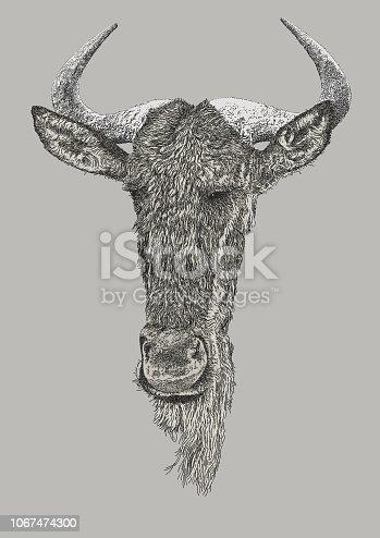 istock Wildebeest Portrait 1067474300