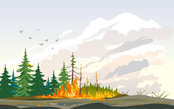 bildbanksillustrationer, clip art samt tecknat material och ikoner med wildfire brinnande träd naturkatastrof - skog brand