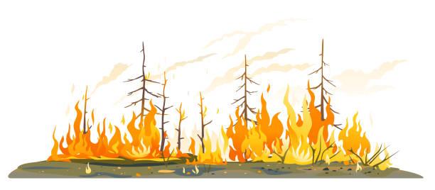 bildbanksillustrationer, clip art samt tecknat material och ikoner med wildfire begreppsmässig isolerad illustration - skog brand