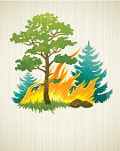 wildfire disaster with burning forest tree and firtrees