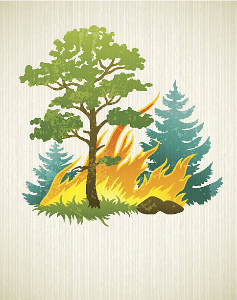 stockillustraties, clipart, cartoons en iconen met wildfire disaster with burning forest tree and firtrees - bosbrand