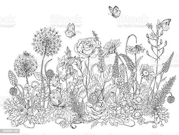Wildflowers and insects sketch vector id539984182?b=1&k=6&m=539984182&s=612x612&h=tldq6aam8wo5mzr5zaho v xc51ayg0s c bj8dp m0=
