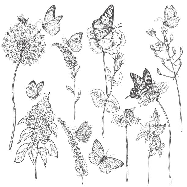 wildflowers  and insects sketch - wildflowers stock illustrations, clip art, cartoons, & icons