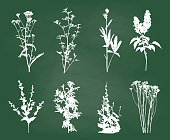 Chalkboard with silhouettes of wild flowers